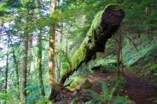 gorge trail waterfalls 028