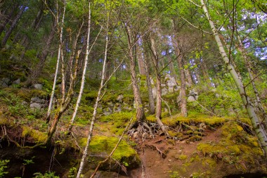 gorge trail waterfalls 100