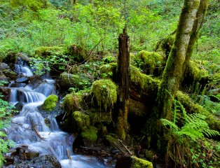gorge trail waterfalls 148