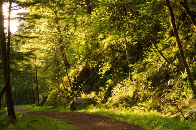 gorge trail waterfalls 314
