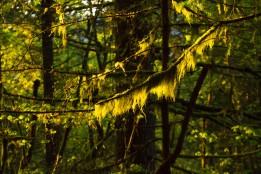 gorge trail waterfalls 329