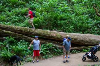 pittock hike 012